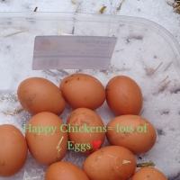 🥚Fresh Eggs 🍳