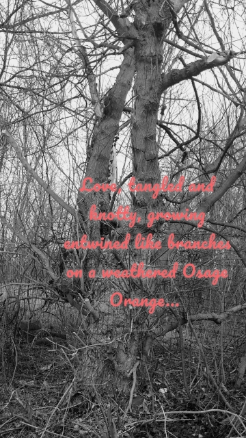 Love, tangled and knotty, growing entwined like branches on a weathered Osage Orange...