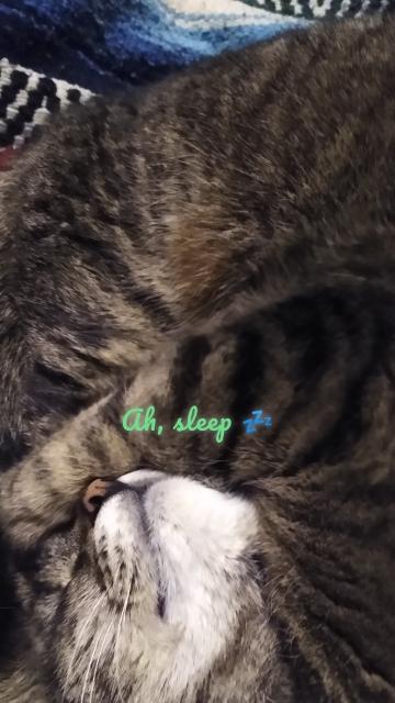 Ah, sleep 💤