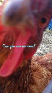 Can you see me now?