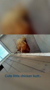 Cute little chicken butt..