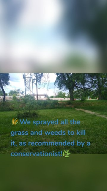 🌾We sprayed all the grass and weeds to kill it, as recommended by a conservationist!🌿