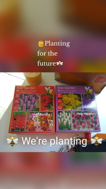 🍯Planting for the future🐝