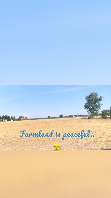 Farmland is peaceful.. 👨🌾