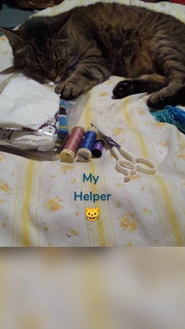 My Helper 🐱