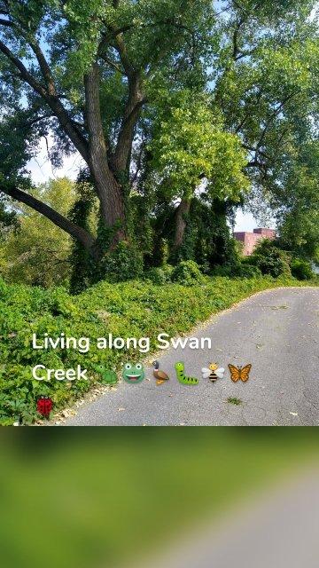 Living along Swan Creek 🐢🐸🦆🐛🐝🦋🐞